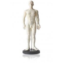 Modelo Anatómico do Corpo...
