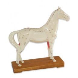 Modelo Anatómico do Cavalo
